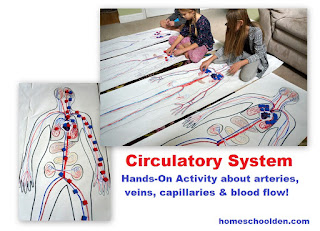 http://homeschoolden.com/human-body-systems/