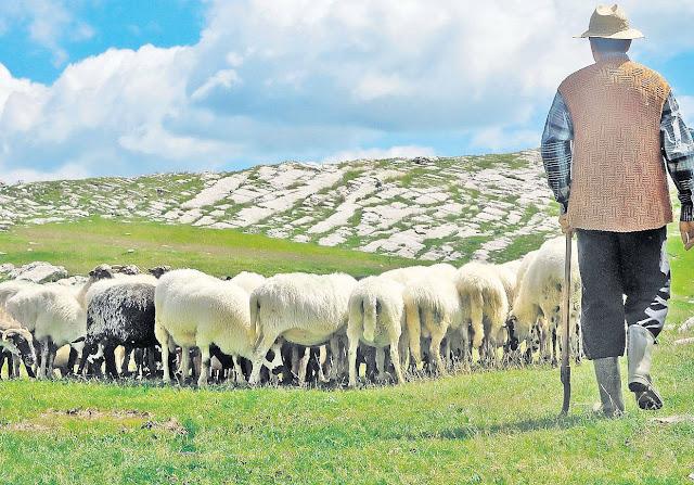 animale agricole