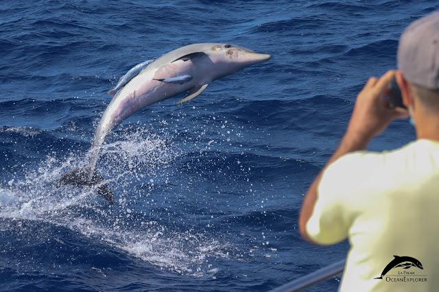 avistamiento-cetáceos-la-palma