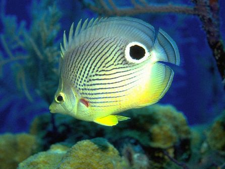Colorful Fish Wallpapers, Beautiful Fish Desktop Pictures ...