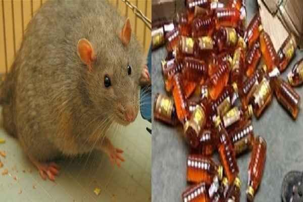 बिहार में थाने के दरोगा बोले 'चूहे पी गए 8 लाख लीटर शराब'