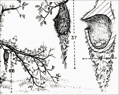 nido de mosqueta
