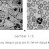 Struktur Sel dan Virus serta Keanekaan dalam Keragaman