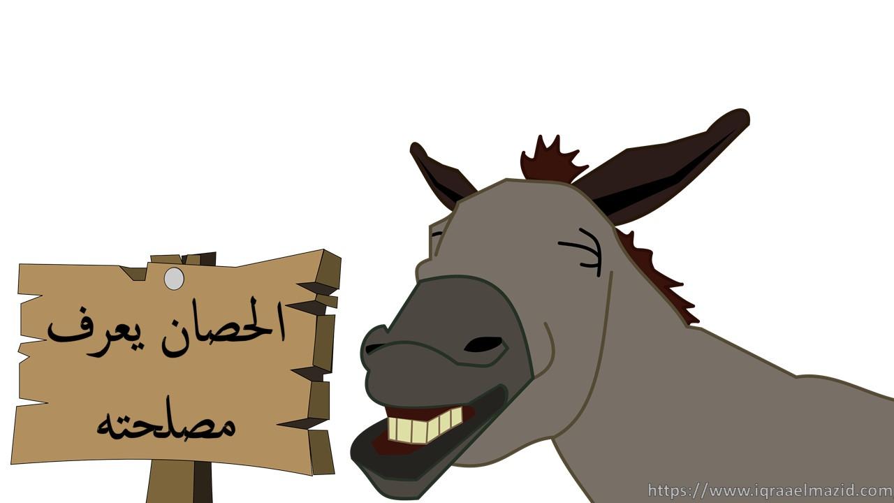 الحصان، الفرس، الخيول، سباق الخيول