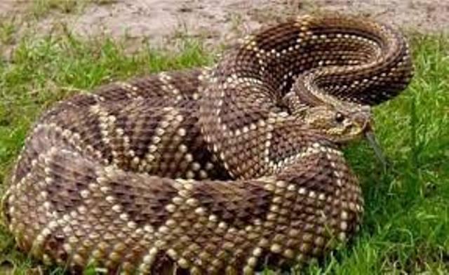 Bomberos-reportan-dos-casos-de-mordeduras-de-serpientes-en-24-horas-en-Perija