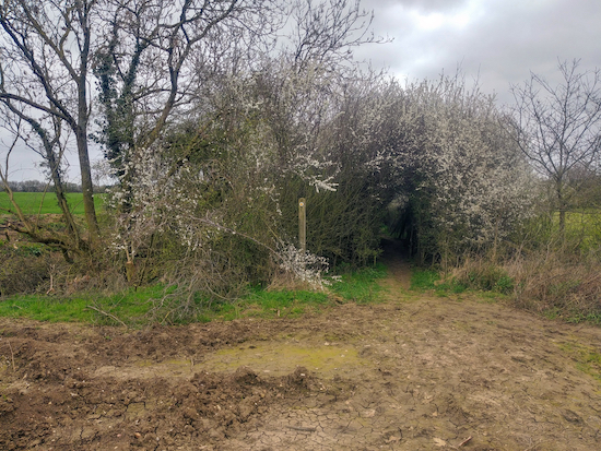 The hedgerow on the opposite side of the field