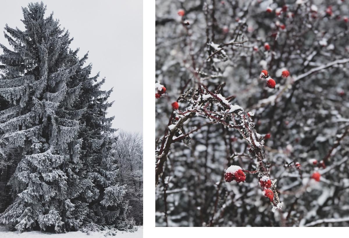 Winterwanderungen Nordschwarzwald schwäbischen Alb Wandern in Baden Württemberg Wintermärchen Zollernalb Premium Winterwanderweg Hohenzollern Zeller Horn Albstadt