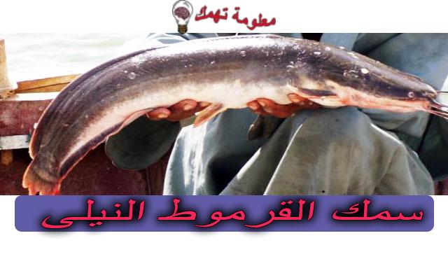 سمك القرموط