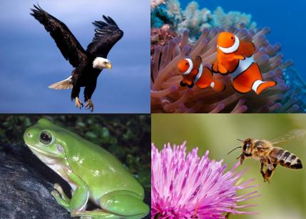 81 Koleksi Gambar Hewan Dan Cara Berkembang Biak Terbaik
