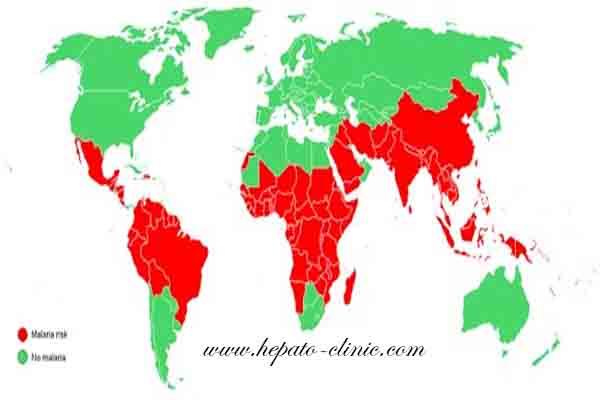 الملاريا مصر, الملاريا وعلاجها, الملاريا في افريقيا, الملاريا والطاعون, ينتقل الملاريا, ينقل الملاريا, يمكن الملاريا, الملاريا والبعوض, الملاريا و فقر الدم المنجلي, الملاريا وانواعها, الملاريا هل هو مرض معدي, الملاريا هل هي معديه, الملاريا هل هو خطير, هل الملاريا مرض فيروسي, هل الملاريا فيروس ام بكتيريا, الملاريا نسبة الوفيات, ناموسة الملاريا, نوبات الملاريا, الملاريا ما هي