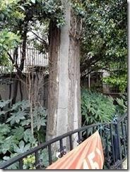 コンクリートで補強された木
