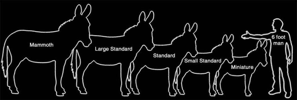 Foghorn Farm Donkey Training: New Donkey Owner Short FAQ