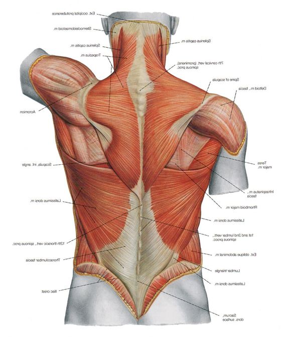 El Rincón de Galeno : 1. Anatomía y sus generalidades