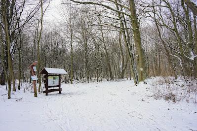 Śnieżna zima w Kampinosie