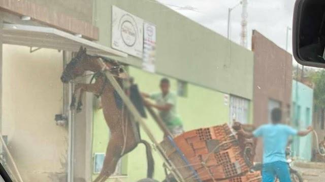 Burro fica pendurado em carroça com excesso de peso em Juazeiro do Norte