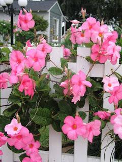 garden tips vine