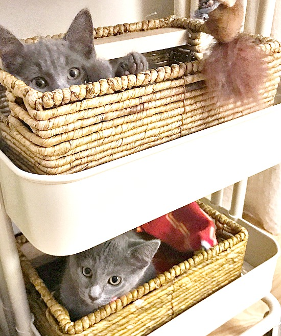 Baskets in a rolling cart for kitten beds