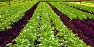 What is losses of organic farming?