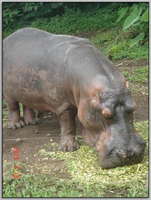 Cerita Liburan Ke Taman Safari Prigen