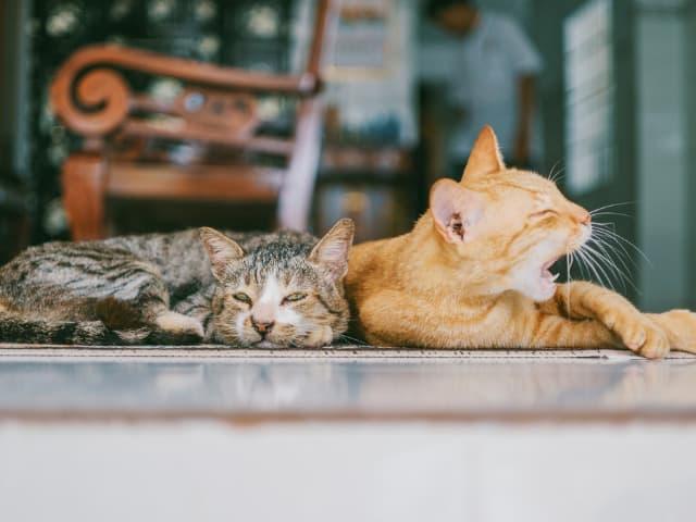 distração para seus felinos