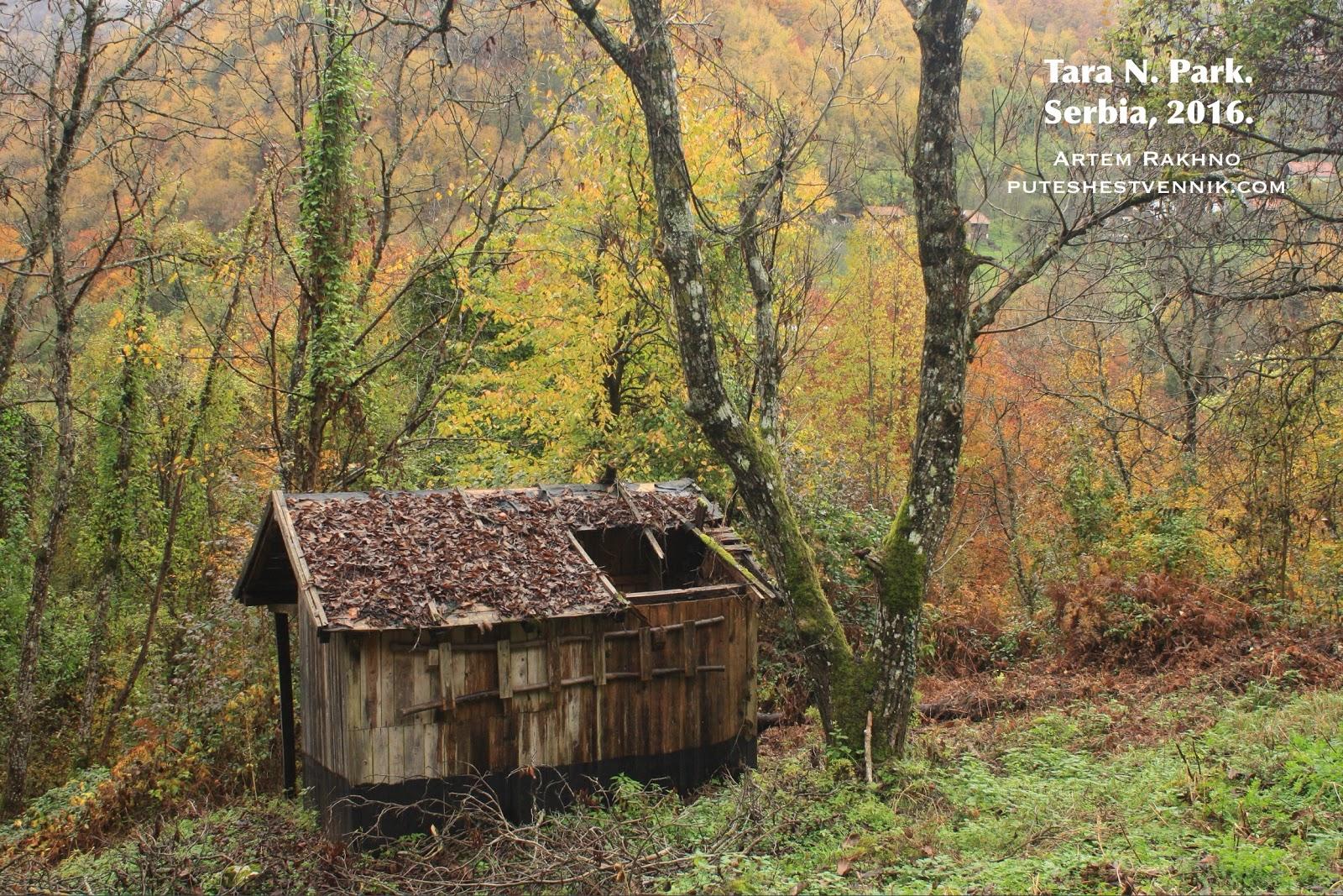 Постройка со сломанной крышей в осеннем лесу