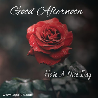 wishes good afternoon images for whatsapp