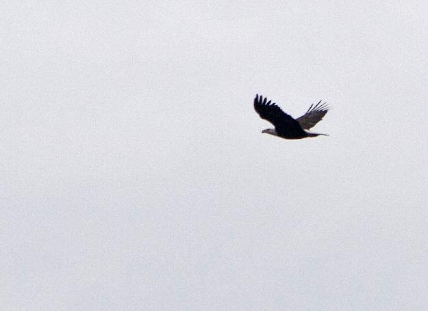 "Soaring Eagle seen through ""normal"" eyes"