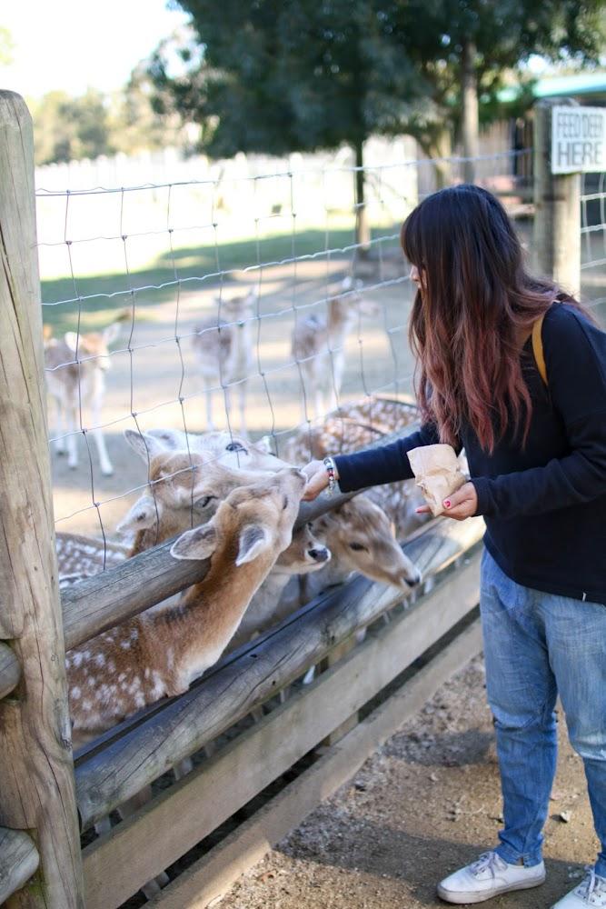 Mogo Zoo Jervis Bay Australia