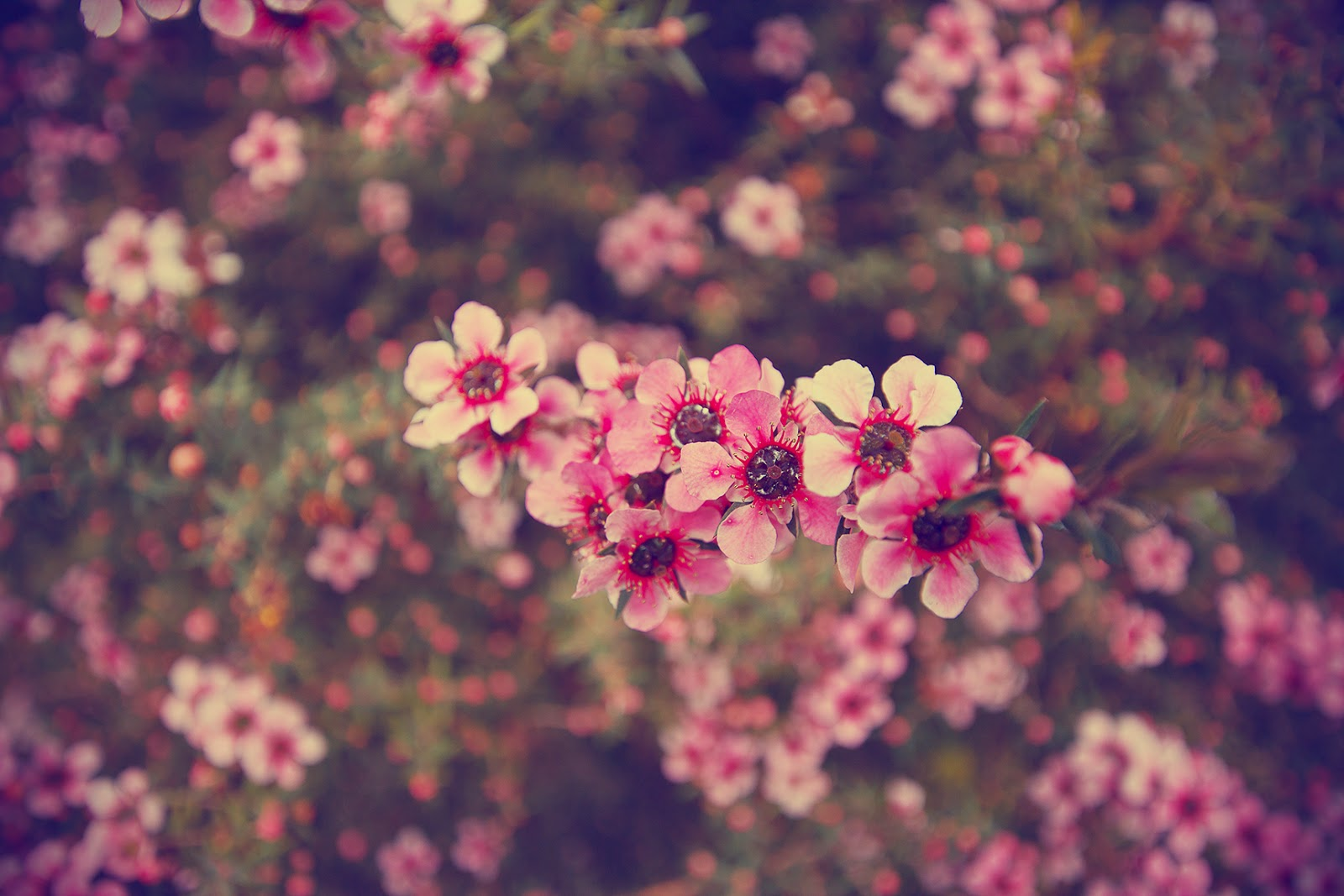 Wallpaper flower tumblr new top artists 2018 top artists 2018 mightylinksfo