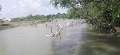 কলাপাড়ায় ভ্যালা জাল ও কারেন্ট জাল দিয়ে রাত-দিন মাছ ধরা, দেশিয় মাছ বিলুপ্তির পথে