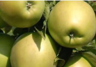 فوائد التفاح لصحة الانسان تفاحة يوميا تغنيك عن الطبيب
