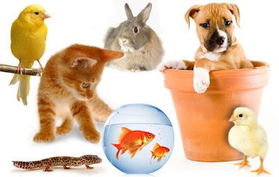 معلومات عن الحيوانات الاليفة