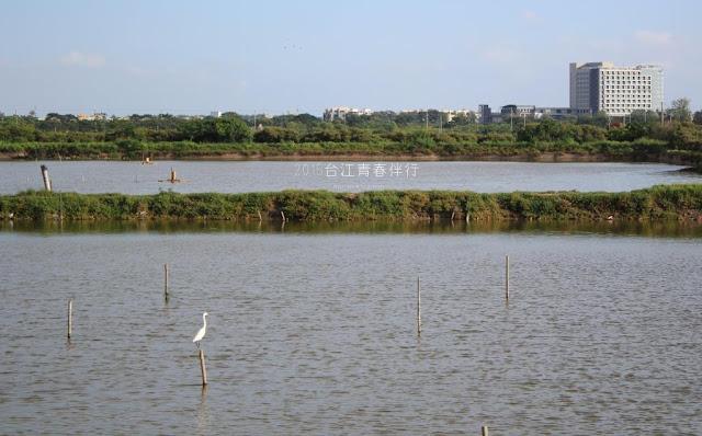 魚塭,不僅是生產地景,也是一處生態地景。
