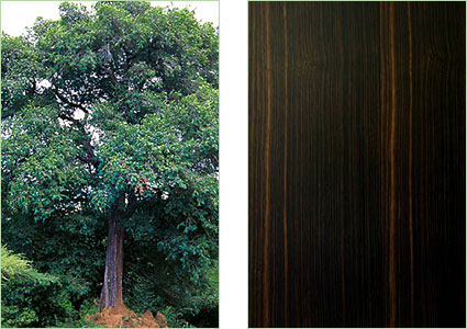 Casini Legnami  Produzione legname da costruzione e da