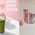 Starbucks offers limited edition of Cherry Blossom drinks with cozy tumblers and mugs