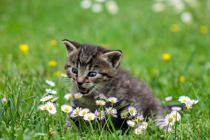 Cara Mengatasi Kucing Tidak Mau Makan dan Tidur Terus