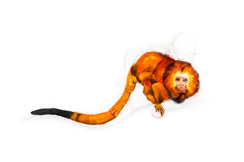 05-Golden-Lion-Tamarin-Emma-Fay-Body-Painting-with-Human-Canvasses-www-designstack-co