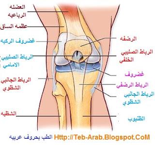 96550825c خشونه الركبه Knee Osteoarthritis : وهو عباره عن مرض تآكل غضروف الركبه ويصيب  كبار السن غالبا. ويؤدي تآكل غضروف الركبه الي الالام الركبه
