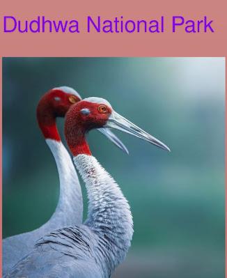 Dudhwa National Park । दुधवा राष्ट्रीय उद्यान