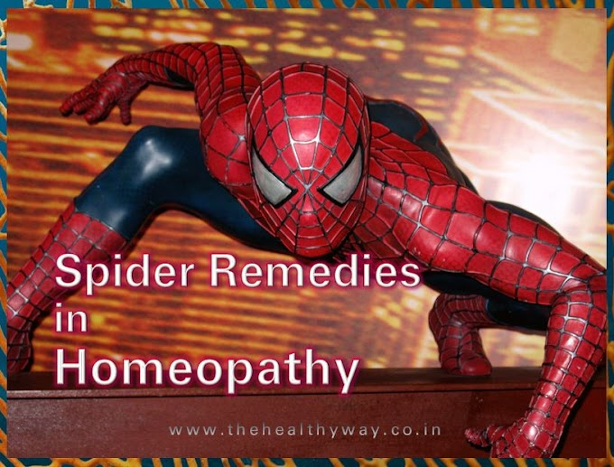 Spider Remedies in Homeopathy