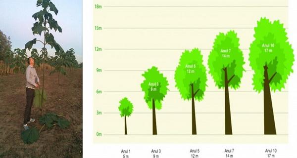 de ce este bine sa plantam copaci
