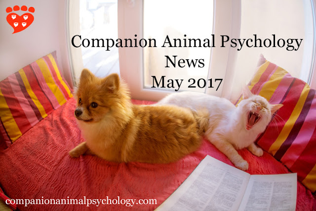 A dog and cat peruse the latest news about pets