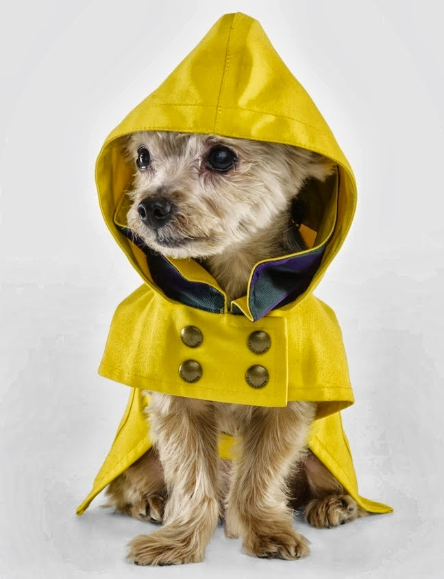 Ralph Lauren The Dog Walk Accessories And Dog Clothing