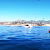 Vídeo chocante mostra enorme baleia engolindo duas mulheres em caiaque
