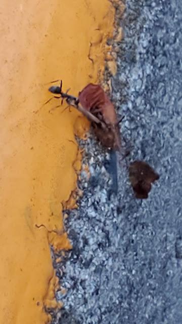 アリが縁石を登ってる