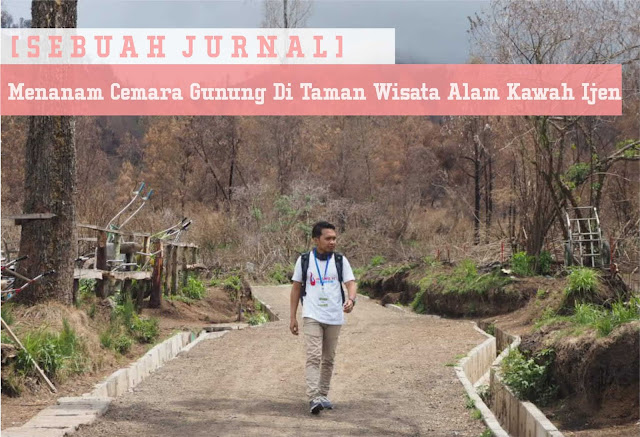 [Sebuah Jurnal] Menanam Cemara Gunung Di Taman Wisata Alam Kawah Ijen