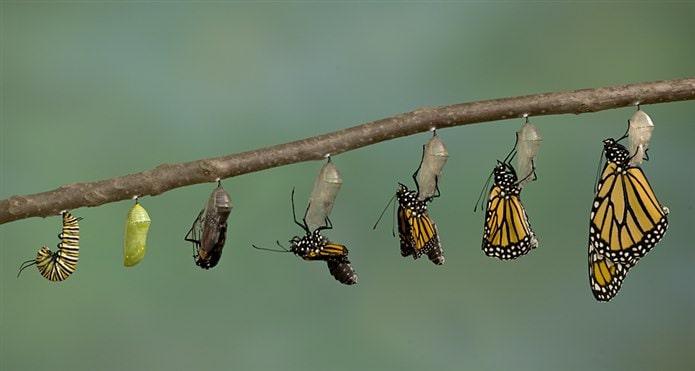 kelebek nasıl ürer
