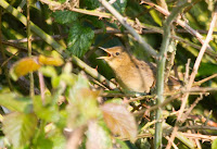 Grasshopper Warbler 21st April 2014