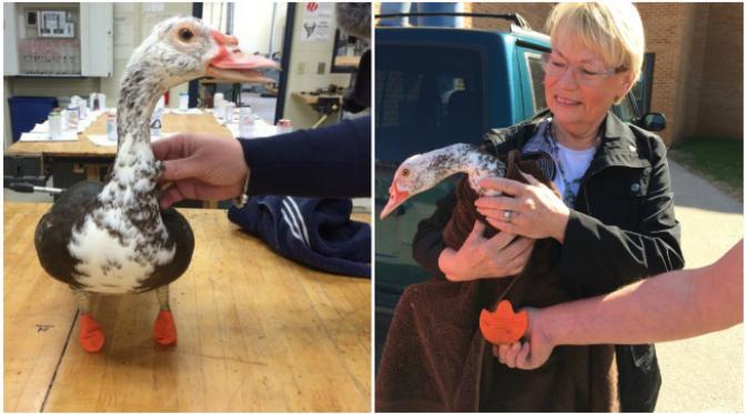 Kecanggihan Printer 3D Bisa Membuat Kaki Bebek