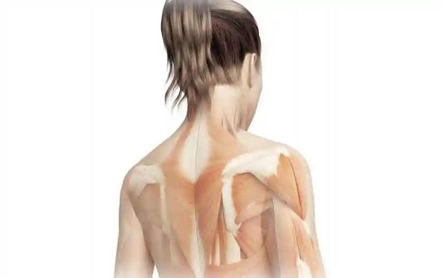 बॉडीवेट एक्सरसाइज रीढ़ की हड्डी को मजबूती देगी